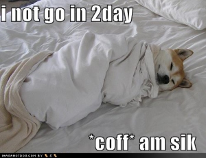funny-dog-pictures-sick-in-bed-cough